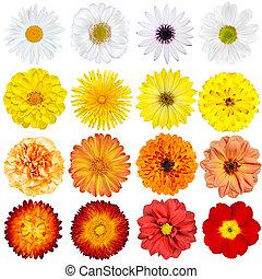 grande, selezione, di, vario, fiori, isolato, bianco, fondo