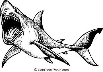 grande, tubarão, isolado