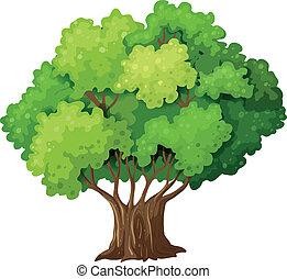 grande, vecchio albero