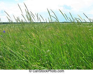 grande, verde, gramado
