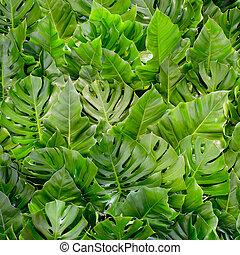 grande, verde, leafs, plano de fondo