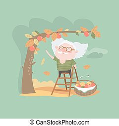 Grandfather collects the harvest of apples. Vector...