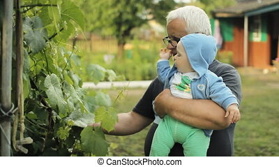 Grandfather showing grandson vine. Beautiful baby smiling and touching plant