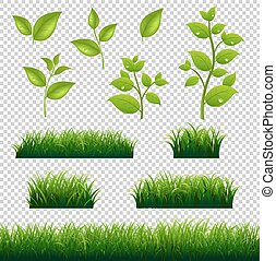 grandi foglie, set, erba verde