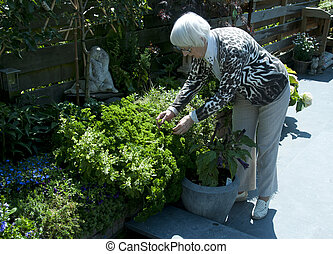 grandma working in the garden - grandma taking parsley from...