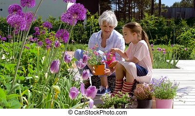 grandmother and girl planting flowers at garden - gardening,...