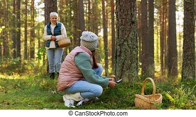 grandmother and granddaughter picking mushrooms - picking ...