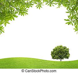 grands conges, arbre, champ, arrière-plan vert, blanc