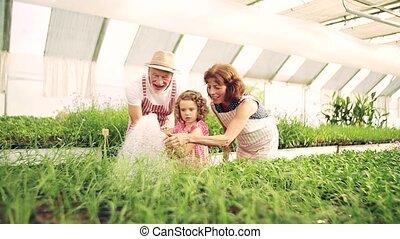 grands-parents jardiner, personne agee, petite-fille,...
