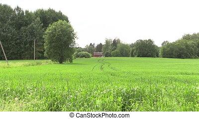 grange house in nature - Rural grange homestead house...