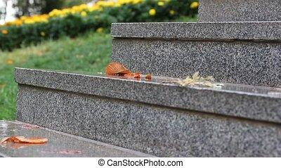 granit, jaune, flowers., pluie, steps.