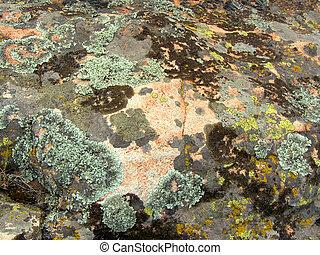 granit, nahaufnahme, moosig, beschaffenheit