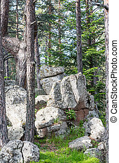 Granite rock formations in pine tree forest