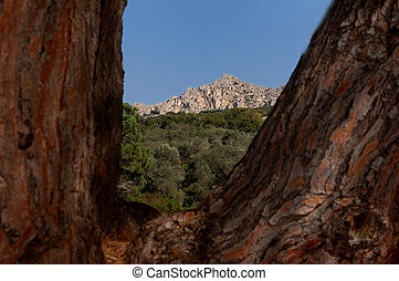 granito, árboles