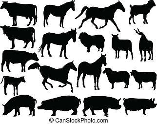 granja, 2, vector, -, animal