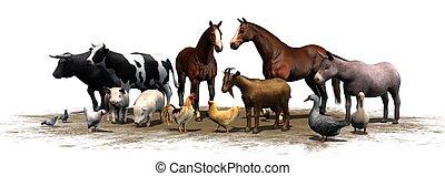 granja, animales