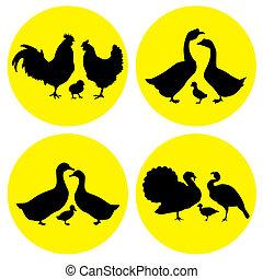 granja, aves de corral, familia