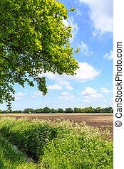 granja, campo, campo, cultivado, zanja, paisaje