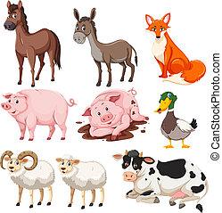 granja, conjunto, animales