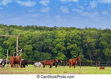 granja, escena, con, caballos