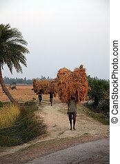 granja, hogar, lleva, arroz, granjero