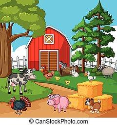 granja, muchos, animales, corral