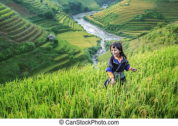 granja, niña, terraza, arroz