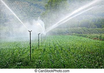 granja, sistema de irrigación, trabajando