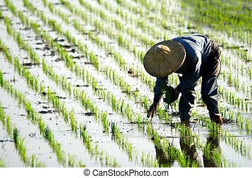 granja, trabajando, granjero