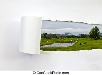 granja, vacas, rasgado, papel, (landscape)