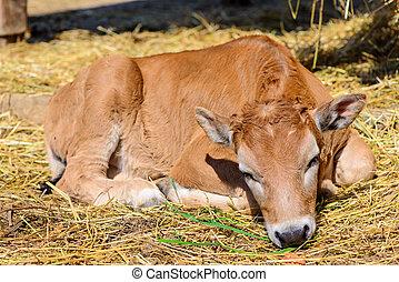 granja, vaquita, vaca