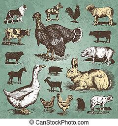 granja, vendimia, Conjunto, animales,  (vector)