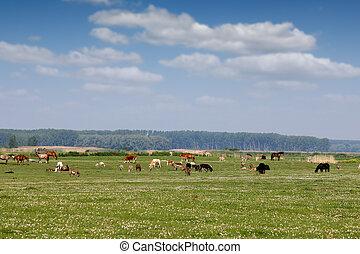 granja, verano, pasto, animales, estación