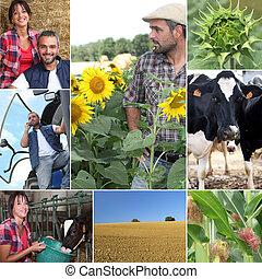 granja, vida, mosaico, diario