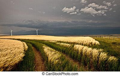 granja, viento, tormenta