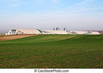 granja, y, trigo verde, campo, agricultura
