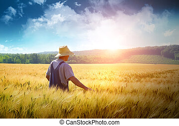 granjero, ambulante, por, un, campo de trigo
