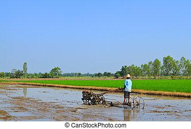 granjero, arada, a, arroz de plantación