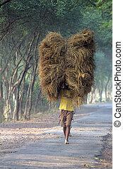 granjero, lleva, arroz, de, el, granja, hogar