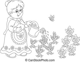 Granny watering vegetables - Grandmother watering carrots...