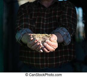 grano, mani