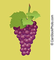 Grape branch with red grapes. Realistic vector illustartion