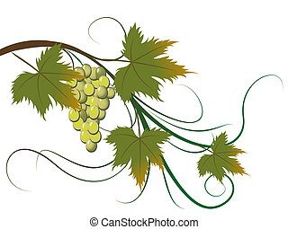 grape brunch - Abstract floral background, vector...