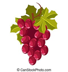 Grape bunch isolated berry winemaking plantation harvest -...