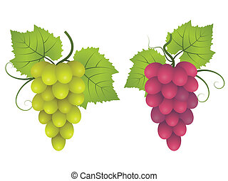 Grape. - Bunches of red and green grapes. Vector...