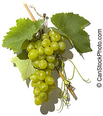 tasty white grape in a cluster over white background