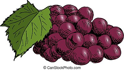 Grape cluster with grape leaf Vintage Hand Drawn Sketch Vector illustration.