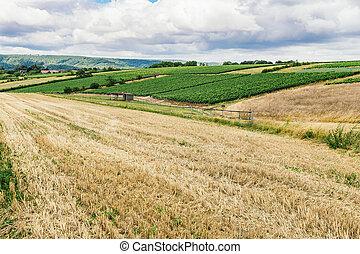 Grape fields of Burgundy