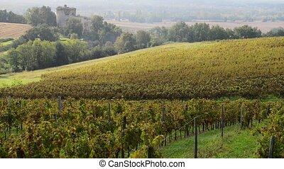 Grape Harvest Machine, Bordeaux Vineyard