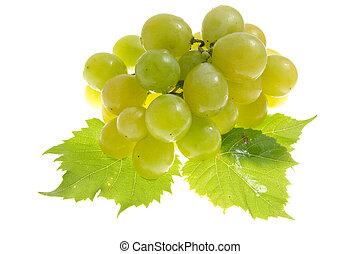 grape isolated